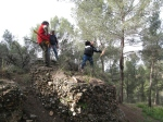 bosque 001
