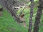 bosque 005